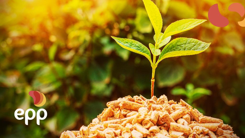 Termelétricas movidas à biomassa: entenda o crescimento desse modelo!