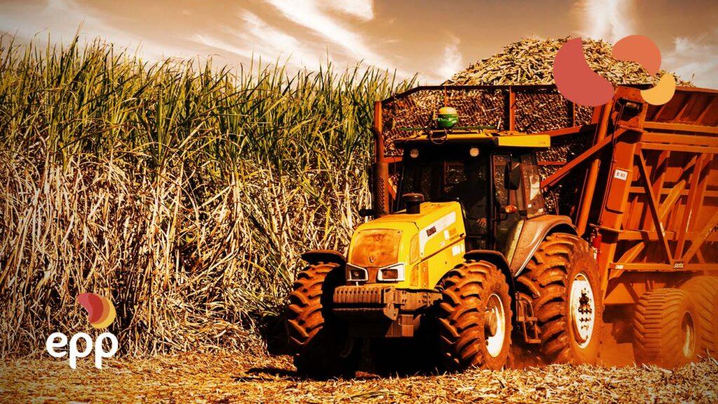 A importância da biomassa para a matriz energética!